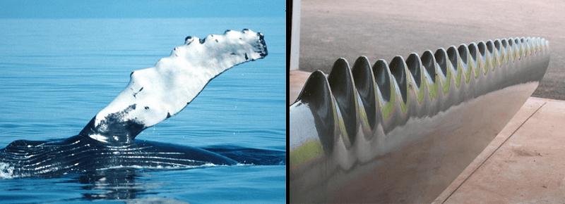 Pás Biomiméticas emulam a barbatana recortada das jubartes