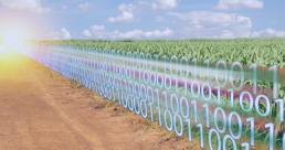 Agricultura - Dados